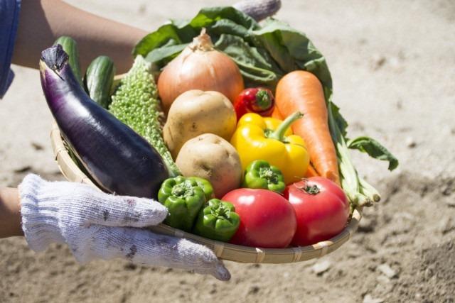 低コストで新鮮な食材を仕入れるなら産地直送!